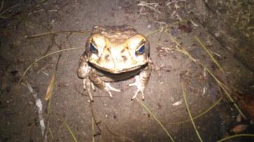 Grumpy toad!